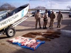 El albur de examen preliminar en la pesca rusa