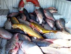 La pesca rusa 3.1 syrdarya